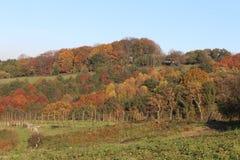 Alberi di Autumn Season sui bei colori differenti Fotografie Stock Libere da Diritti