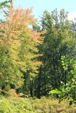 Alberi di autunno Immagine Stock Libera da Diritti