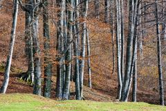 Alberi di autunno Fotografie Stock