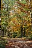 Alberi di autunno Immagini Stock