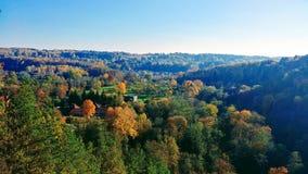 Alberi di autunno fotografia stock libera da diritti