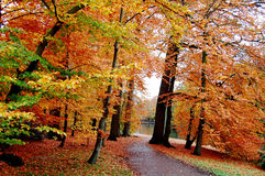 Alberi di autunno Fotografie Stock Libere da Diritti