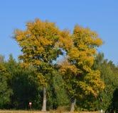 Alberi di autunno immagine stock