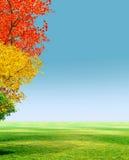 Alberi di autunno royalty illustrazione gratis
