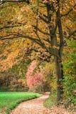 Alberi di autunno immagini stock libere da diritti