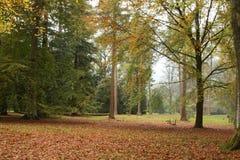 Alberi di autunno all'arboreto di Westonbirt Fotografia Stock