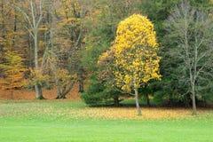 Alberi di autunno con i fogli di colore giallo e di colore rosso fotografie stock
