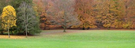 Alberi di autunno con i fogli di colore giallo e di colore rosso Fotografie Stock Libere da Diritti