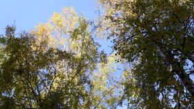 Alberi di autunno contro il cielo ed i grattacieli archivi video