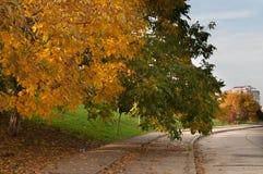 Alberi di autunno da una via Immagine Stock