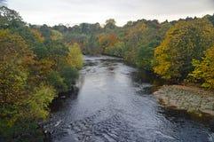 Alberi di autunno dallo swale del fiume immagini stock libere da diritti