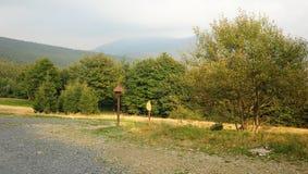 Alberi di autunno e nebbioso Immagine Stock Libera da Diritti