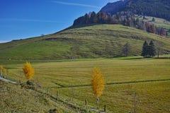 Alberi di autunno e supporto Rigi, alpi, Svizzera Fotografia Stock