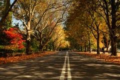Alberi di autunno lungo una via nella stagione di caduta Fotografie Stock Libere da Diritti