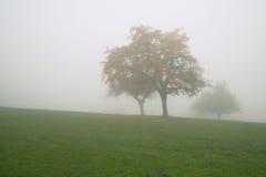 Alberi di autunno in nebbia pesante Fotografie Stock Libere da Diritti