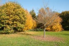Alberi di autunno nella campagna britannica Fotografie Stock