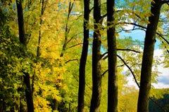 Alberi di autunno in parco Immagine Stock Libera da Diritti