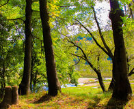 Alberi di autunno in parco Fotografia Stock Libera da Diritti