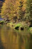 Alberi di autunno, Polonia Fotografie Stock Libere da Diritti