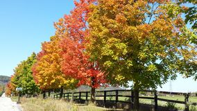 Alberi di autunno sui cieli blu Immagini Stock