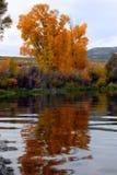 Alberi di autunno sulla pala nel gherone 2 Immagine Stock