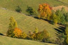 Alberi di autunno sulle colline della montagna Immagini Stock