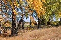 Alberi di autunno in un campo con le foglie verdi e dorate fotografie stock