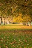 Alberi di autunno a Windsor Fotografia Stock Libera da Diritti
