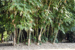 Alberi di bambù con le sculture umane Fotografia Stock