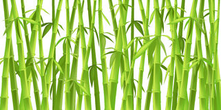 Alberi di bambù cinesi Fotografie Stock