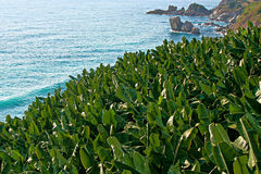 Alberi di banana dal mare Fotografia Stock Libera da Diritti