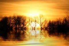 Alberi di Behing di tramonto Fotografie Stock Libere da Diritti