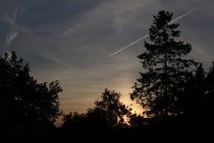Alberi di Behing di tramonto Fotografia Stock Libera da Diritti