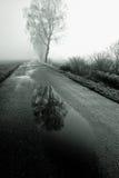 Alberi di betulla che allineano strada Fotografia Stock Libera da Diritti