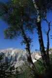Alberi di betulla nelle alpi di Apuan in Versilia Nei precedenti fotografia stock