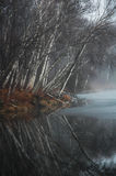 Alberi di betulla nudi riflessi in acqua tranquilla Fotografie Stock