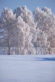 Alberi di betulla sotto la brina nel campo di neve nella stagione invernale Fotografie Stock