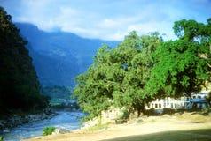 Alberi di Bodhi lungo il Kali Gandaki Fotografie Stock