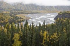 Alberi di caduta del fiume della valle dell'Alaska Matanuska Fotografia Stock Libera da Diritti