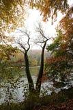 Alberi di caduta sopra il fiume Fotografie Stock
