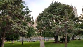 Alberi di Central Park degli alberi di Buenos Aires argentina ed aria naturale di New York fotografie stock libere da diritti