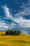 Alberi di cipresso di Toscana Fotografia Stock Libera da Diritti