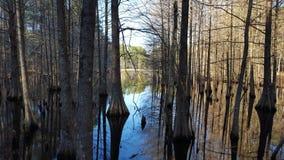 Alberi di cipresso e del lago Immagine Stock Libera da Diritti