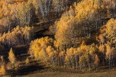 Alberi di Clolorful nella prateria di Mongolia Interna in Wulanbutong fotografia stock libera da diritti