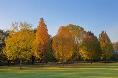 Alberi di colore di autunno Fotografia Stock