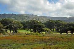 Alberi di Cypress Fotografia Stock Libera da Diritti