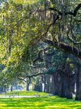Alberi di Cypress di estate in Charleston South Carolina fotografia stock