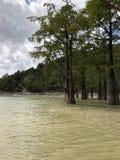 Alberi di Cypress, alberi, lago, sukko, nuvole, natura fotografia stock