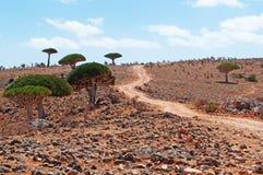Alberi di Dragon Blood, rocce rosse, strada in Shibham, plateau di Dixam, isola di socotra, Yemen Fotografia Stock
