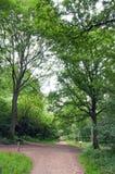 Alberi di estate nella campagna britannica Fotografia Stock
